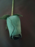 Dark Green roos