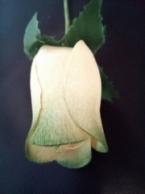 White /Dark Green roos